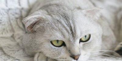 Can Cats Eat Raisins