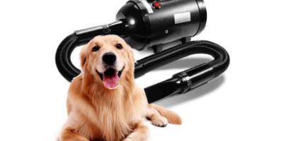 Best Dog Grooming Blow Dryer