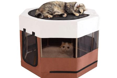 Best Indoor Cat Enclosures 2020